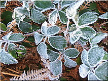 NY1700 : Frosted brambles over bracken, close to River Esk by Andrew Hill