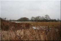 SU5985 : Cholsey Marsh by Bill Nicholls