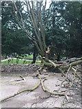 SE2768 : Toppled & Torn by Matthew Hatton