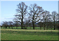 SO5689 : Grazing Land and Oak Trees, Holdgate, Shropshire by Roger  Kidd