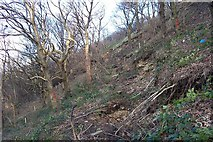 SE1322 : Landslide Reins Wood by Richard Kay