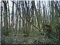 TL1512 : Wood Ayres End Lane by Gary Fellows