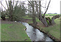SO5183 : Pye Brook near Lawton, Shropshire by Roger  Kidd
