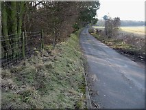 TR3153 : Looking S along road to Betteshanger, Sangrado's Wood on the left by Nick Smith