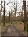 TQ1684 : Oak trees of Horsenden Wood by David Hawgood