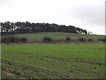 NZ5315 : Hambleton Hill by Stephen McCulloch