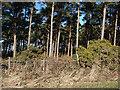 NZ6817 : Merrys Wood by Stephen McCulloch