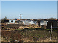 NZ6716 : Allotments at Lingdale by Stephen McCulloch
