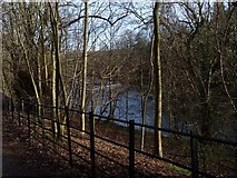 NS5666 : Woodland and River Kelvin by Stephen Sweeney