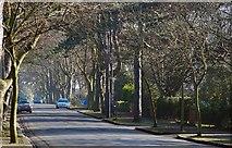 J3773 : Cyprus Avenue, Belfast by Albert Bridge