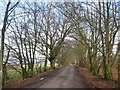 NY4679 : Avenue of trees on the road to Kershope by Oliver Dixon