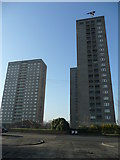 NS5564 : Magpie above the tower blocks by Jonathan Billinger