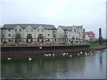 SX9291 : Flats beside River Exe, reduced flow by David Smith