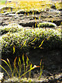 TG3419 : Moss on churchyard wall by Evelyn Simak