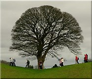 J3267 : Rambling Oak Tree, Giant's Ring, Belfast by Rossographer