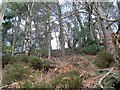 NS5576 : Woods north of Mugdock Reservoir by Stephen Sweeney