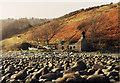 SH2327 : Ruin near Bryn Foulk by Peter Bond