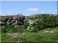SW6911 : Cornish hedge on The Lizard by Rod Allday