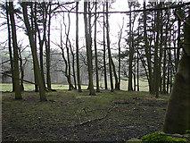 SD8172 : Woodland near Horton by John Lucas