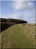 SJ1663 : Bridleway to Moel Famau by David Quinn