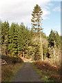 SX2297 : Conifers by Penhallam by David Hawgood