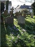 SX7087 : Gravestones and crocuses, Chagford by Derek Harper