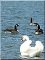 SX8670 : The Boss at Decoy Country Park by paul dickson