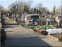 TQ4667 : Lower Road allotments, Orpington by Ian Capper