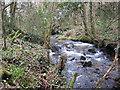 SX0069 : Stream in Hustyn Wood by Rod Allday