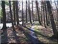 NY9538 : Footpath alongside Rookhope Burn (2) by Mike Quinn