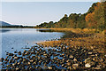 NH9609 : Loch Morlich shoreline by Nigel Brown
