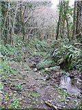 SX8578 : Bridleway near Chudleigh by paul dickson