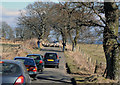 NN9629 : Traffic Hold-up caused by Sheep on the Road by Peter Gamble