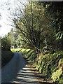 SX1686 : Lane near Trewinnow by Derek Harper