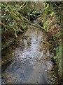 SX1388 : River Camel near Hendraburnick by Derek Harper