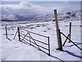 NH8019 : Old Gate and New Fence by Dorothy Carse