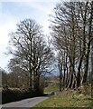 SX8979 : Lane at Beggar's Bush by Derek Harper