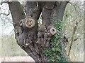 SP0055 : Oak tree, north of Radford by Brian Robert Marshall