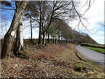 SX8979 : Lane near Beggar's Bush by Derek Harper