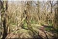 SS8577 : Woodland, Cwm y Gaer, South Wales by eswales