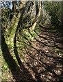 SX8879 : Shadows across bridleway by Derek Harper