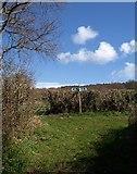 SX8979 : Bridleway T-junction by Derek Harper