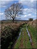 SX8979 : Wet bridleway by Derek Harper