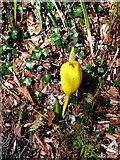 NS2209 : Unusual plant at Culzean by Gordon Brown