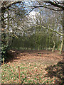 TG1122 : Woodland on the grounds of Booton estate by Evelyn Simak