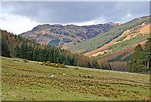 NN4719 : Southern end of Monachyle Glen by Dr Richard Murray