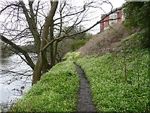 NS3421 : Footpath next to the River Ayr by david johnston