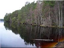 NH9718 : Loch Garten by Iain Thompson