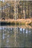 NZ5906 : Small Pond, Greenhow Forest by Mick Garratt
