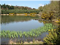 NZ2090 : Pond in Blubbery Wood by Norman MacKillop